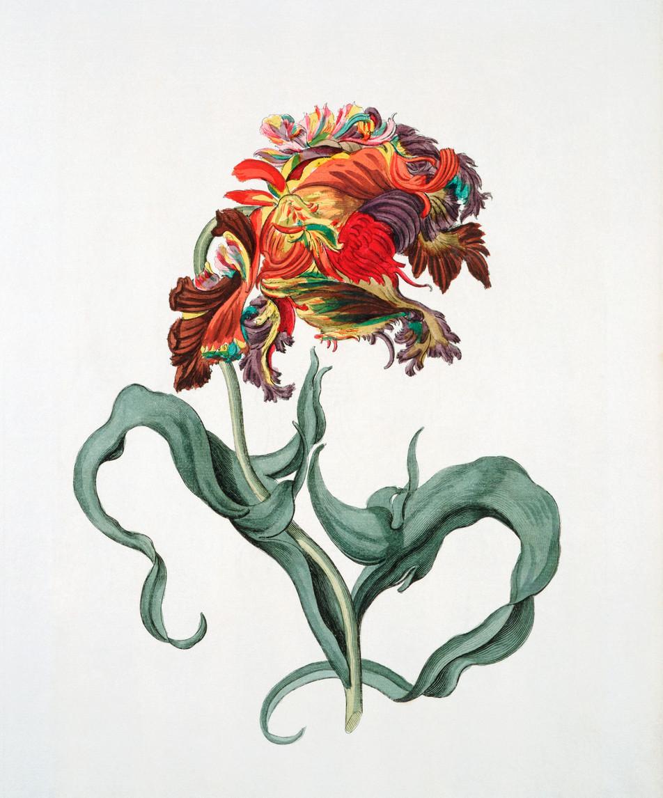 Blumen Illustration No. 03
