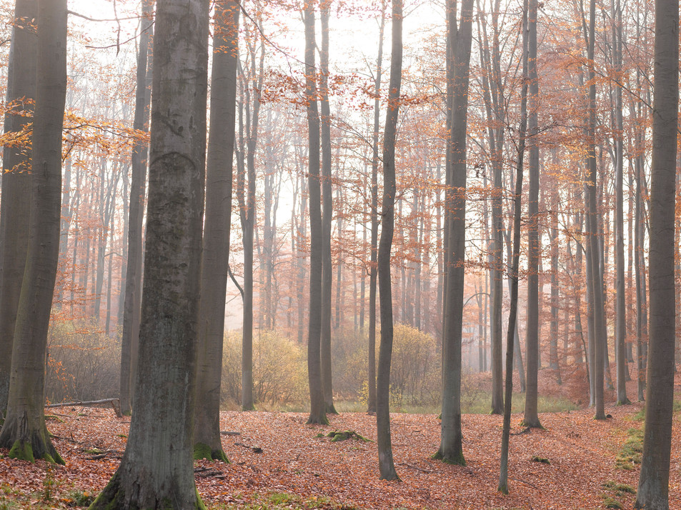 Herbstwald No. 08