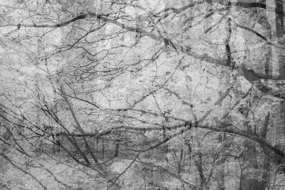 Infrarot Wood No. 01