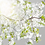 Thumbnail: Baumblüten No. 02