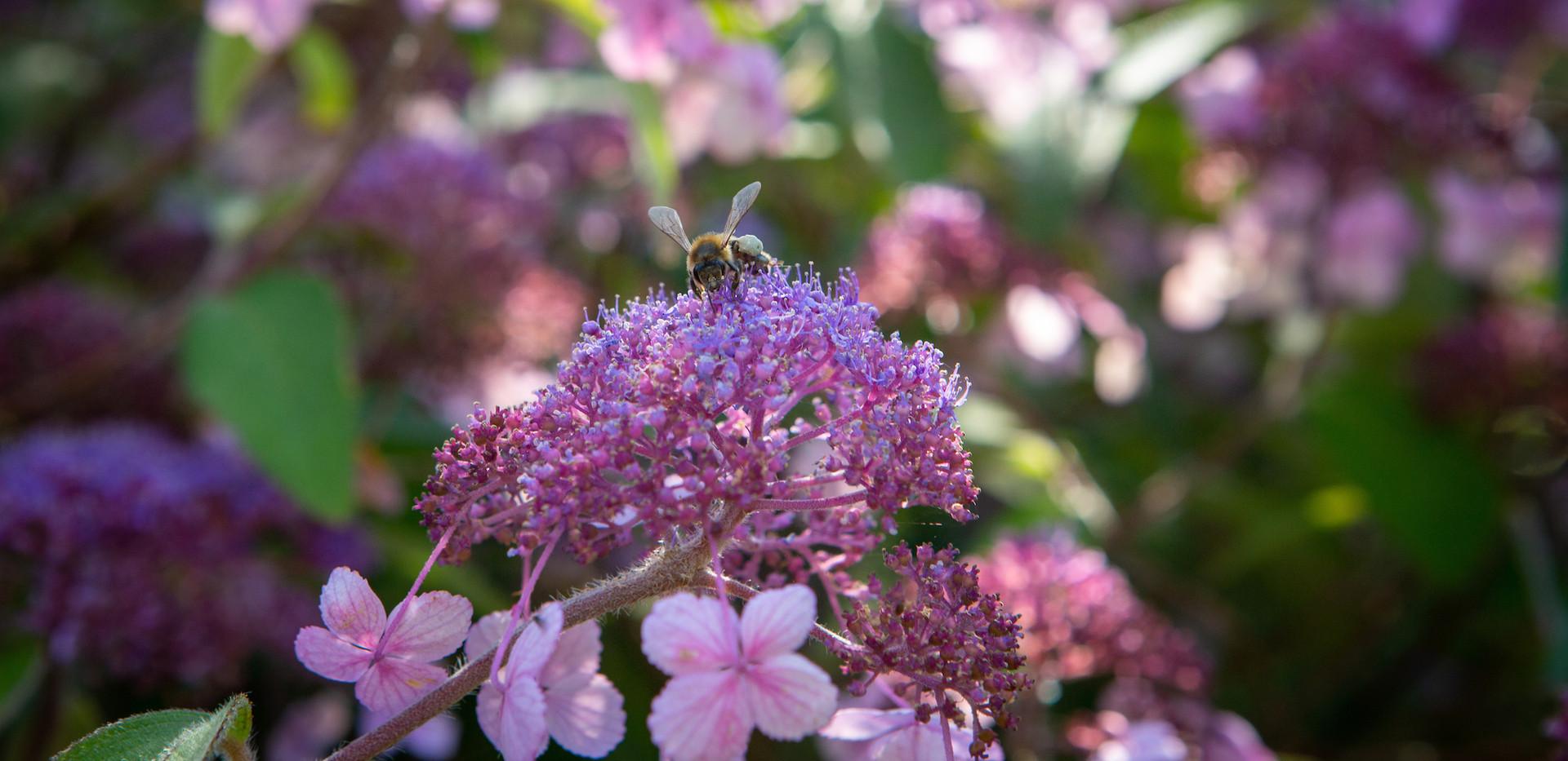 Pink flowers and bee.jpg