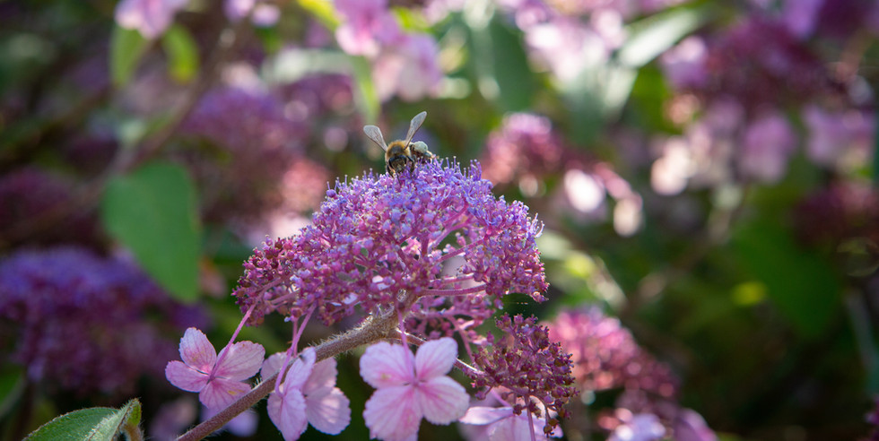 Pink flowers and bee.jpg