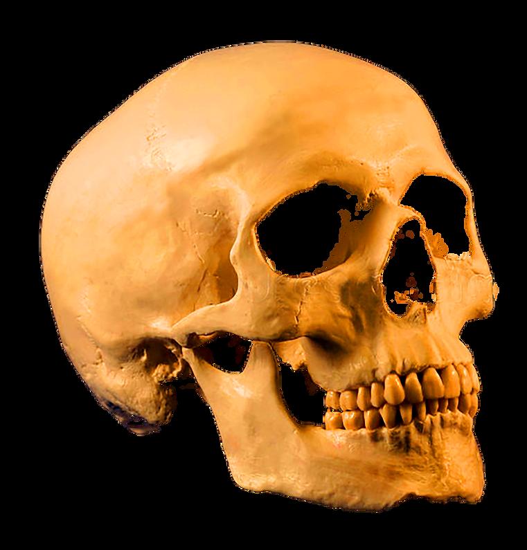 skull 1.PNG