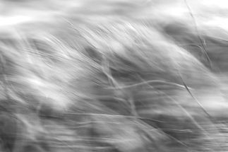 Belatzea-Texturas-naturales-03_edited.jp