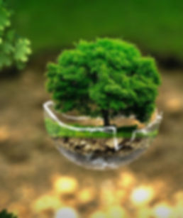 environment-2196690_1280.jpg