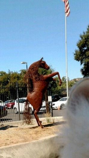 Horse and Lulu ear.JPG