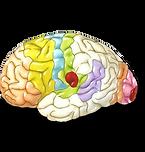 Нейромаркетинг МГ