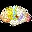 Показатели ЦНС в нейромаркетинге, ритмы отвечающие за активное внимание