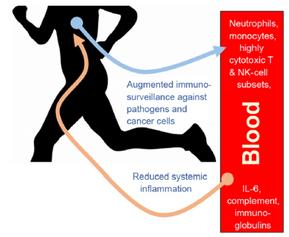 Durasi Olahraga Tepat, Imun Meningkat