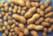 1200px-ARS_peanuts.jpg