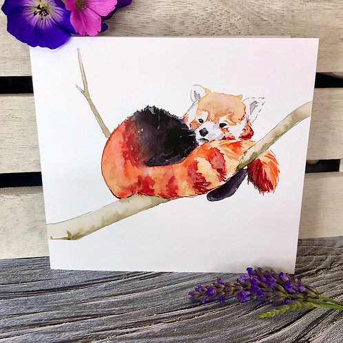 Cosy Red Panda Card
