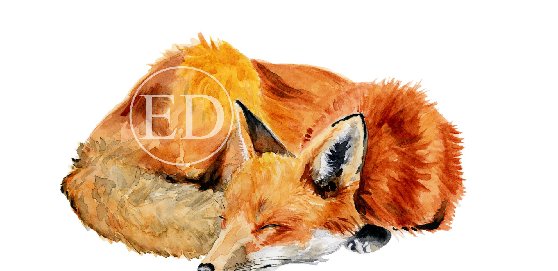 Sleepy Fox.png