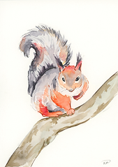Wispy Squirrel Illustration.png