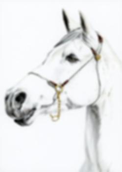 Freckled Horse Brown Eyes.png