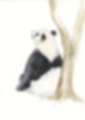 Thinking Panda Illustration.png