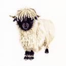 Valais Blacknose Sheep.png