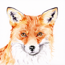 Curious Fox.png