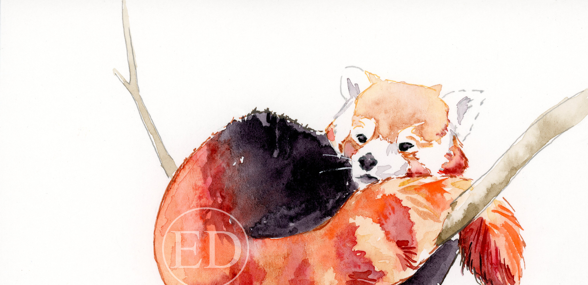 Cosy Red Panda Illustration.png
