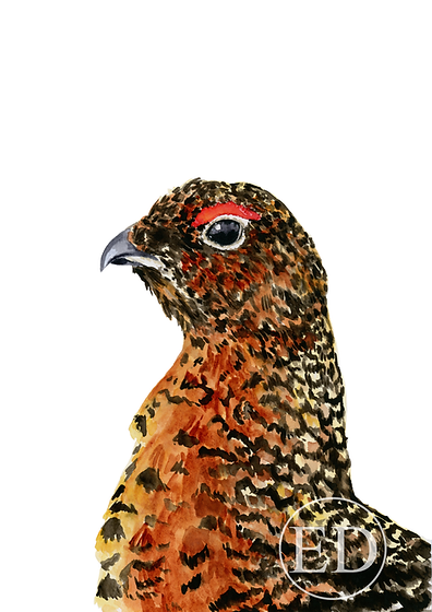 Red Grouse.png