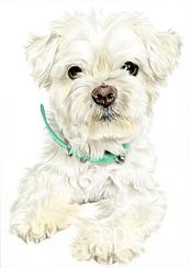 Mint Collar Pup.png