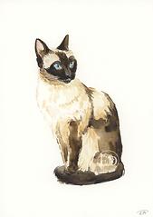 Siamese Mini Illustration.png