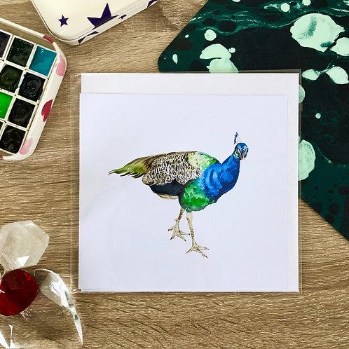 Broughton Hall Peacock Card