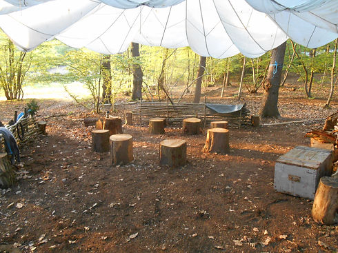 Canopy with stumps.JPG