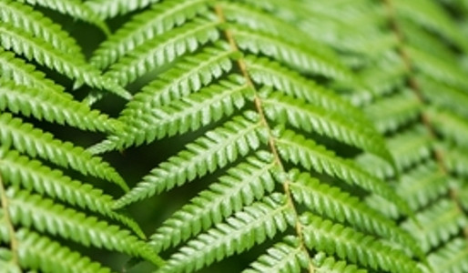 Ferns – Dinosaur food