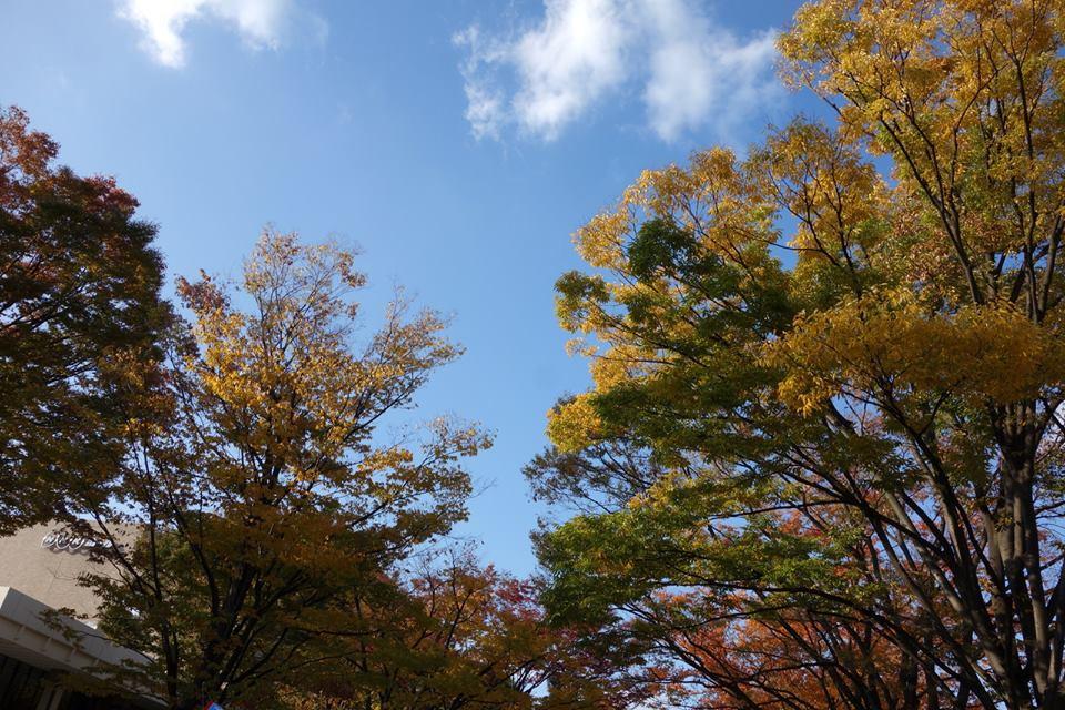 秋の代々木公園