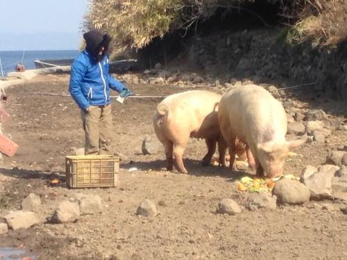 豚のすみか