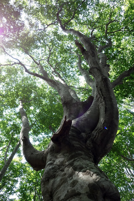 mothertree