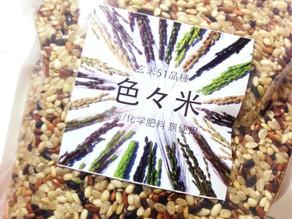 多様性の美しさ 〜色々米〜