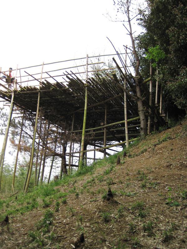 tozisha_bamboo-Deck_1