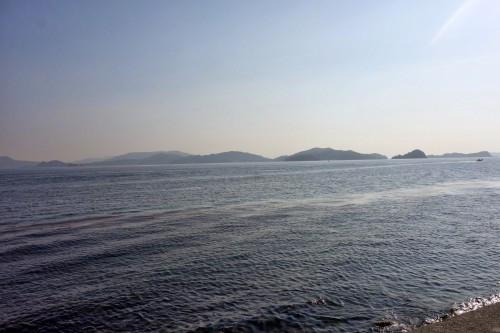 海とひじき