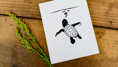Turtle Surf Art