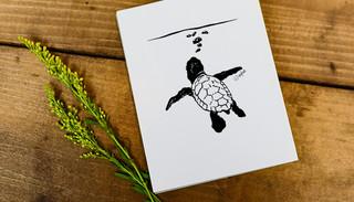 Turtle Surf Art