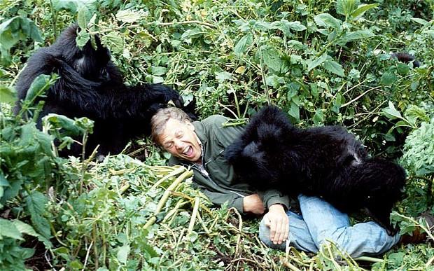 David Attenborough and the Rwandan Gorillas.
