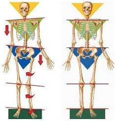 skeletal-alignment
