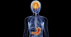 stomachbrain