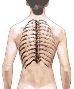 A nice image robbed from the University of Virginia site, clicking the image will take you to their site with some good info on spinal anatomy