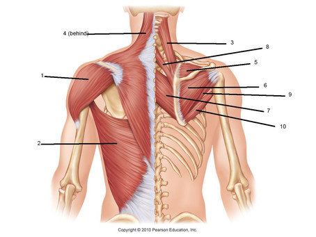 Monday Mobility: Middle & Upper Back Stretch