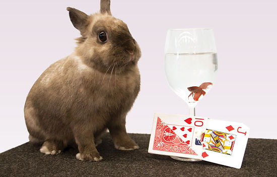 Presto the Rabbit and Flutter the Fish