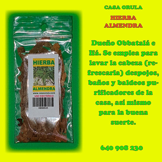 HIERBA ALMENDRA