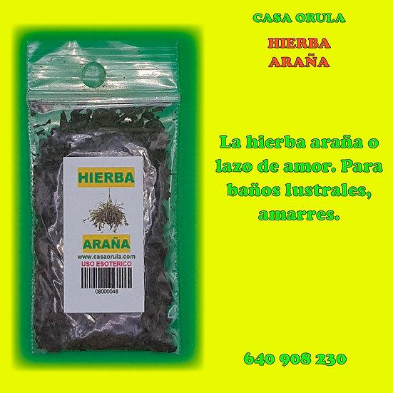 HIERBA ARAÑA