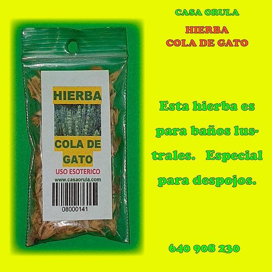 HIERBA COLA DE GATO