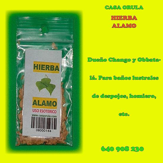 HIERBA ALAMO