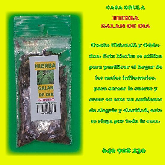 HIERBA GALAN DE DIA