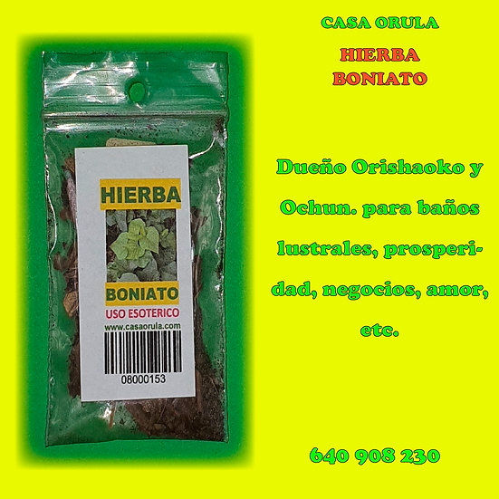 HIERBA BONIATO