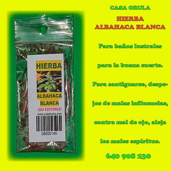 HIERBA ALBAHACA BLANCA