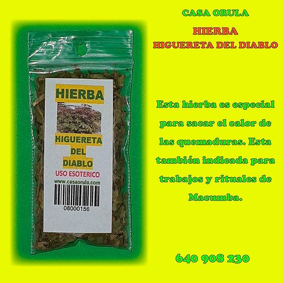 HIERBA HIGUERETA DEL DIABLO
